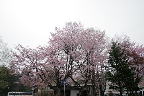 karu2003.JPG